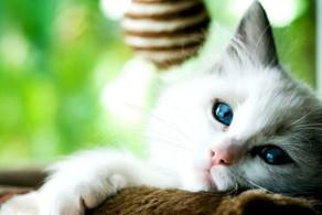 Covid é comum em cachorros e gatos domésticos, revela estudo