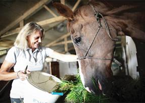 O enigma dos cavalos mutilados na França rural