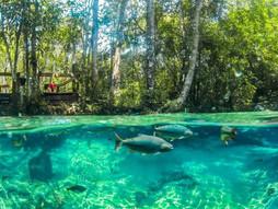 Temporada de Pesca deve aumentar em até 20% o fluxo turístico em Mato Grosso