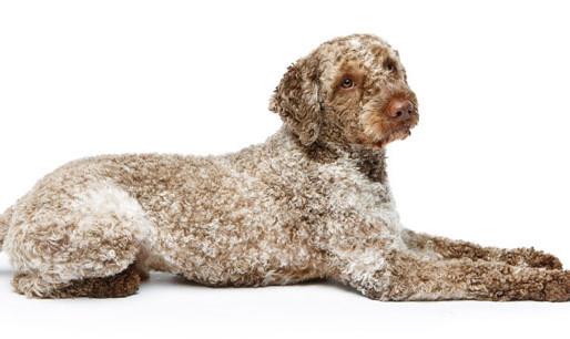 Cachorros e gatos também podem ter vitiligo