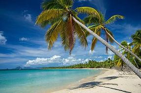 plage-les-salines-cocotiers-sainte-anne-
