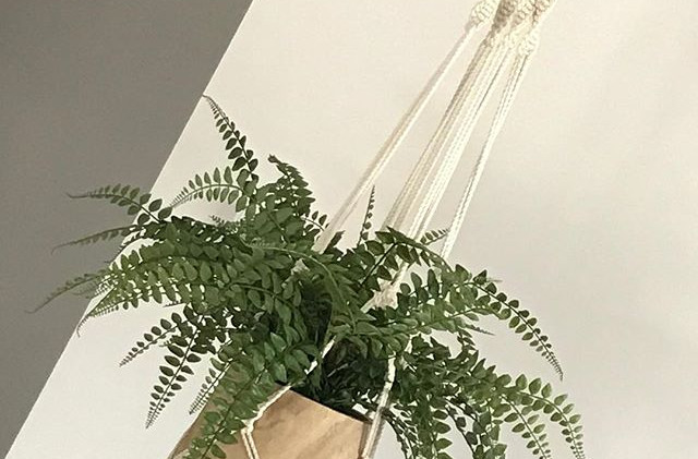My chunky 9mm Rope Plant hanger is defin