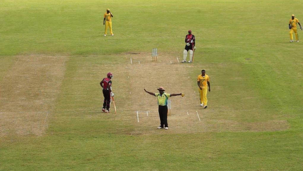 cricket5.jpg