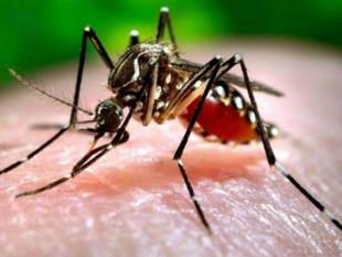 Florida Commissioner Adam H. Putnam Issues Mosquito Declaration
