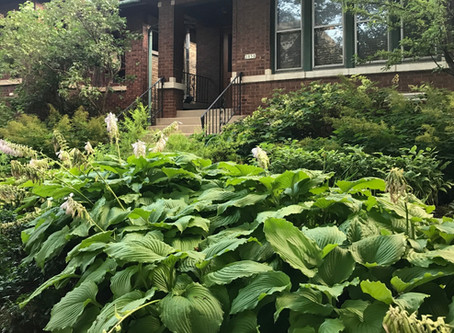 Where to Buy Native Plants Around Chicago - 2018