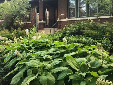 Where to Buy Native Plants Around Chicago - 2018
