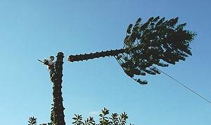 tree pic 3.jpg