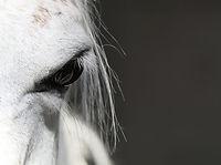 horse-3356298_1920-1024x765.jpg