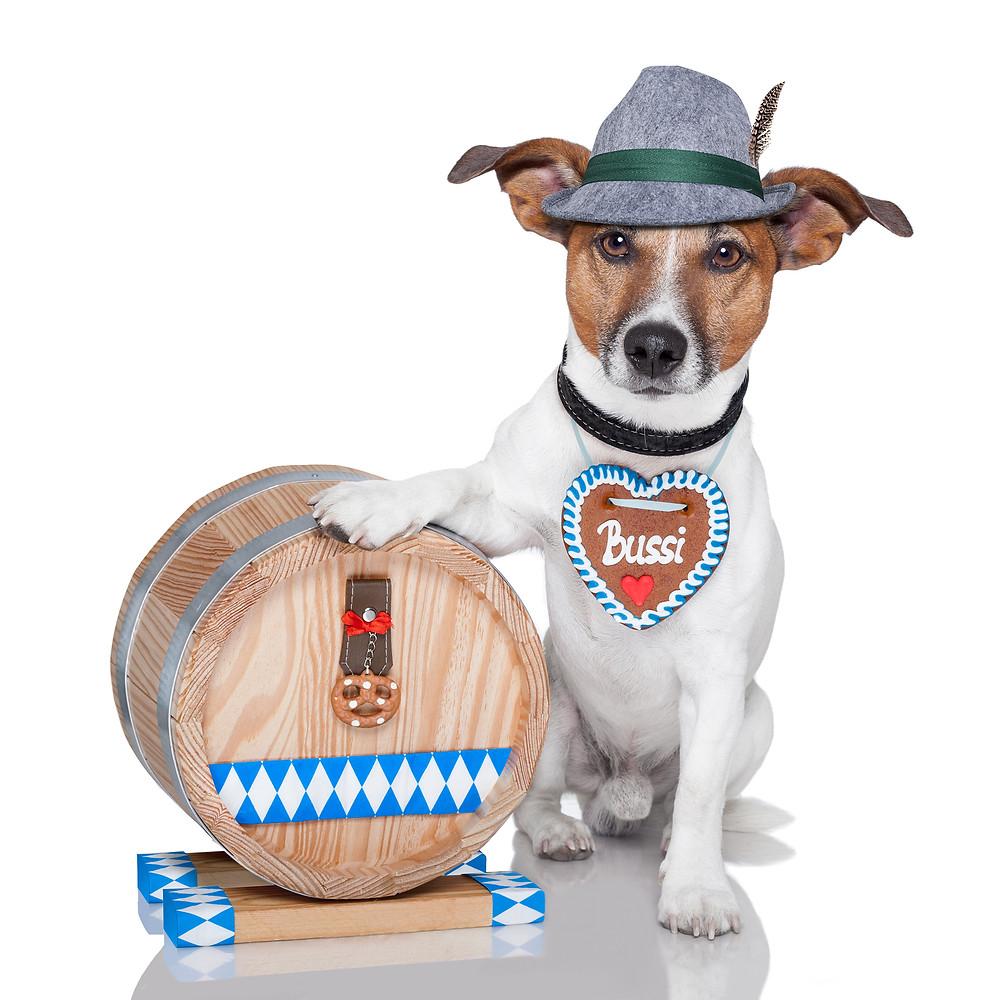 bigstock-Oktoberfest-Dog-34812464-2.jpg