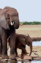 Elephant mama and baby KD.jpg
