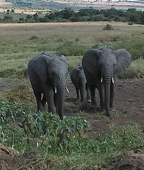 Kenya 2018 Elephant Adventure Video