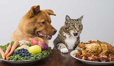 Homemade Pet Food Pros & Cons