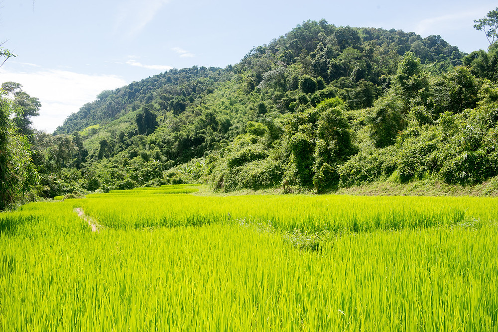Hiking through the rice fields