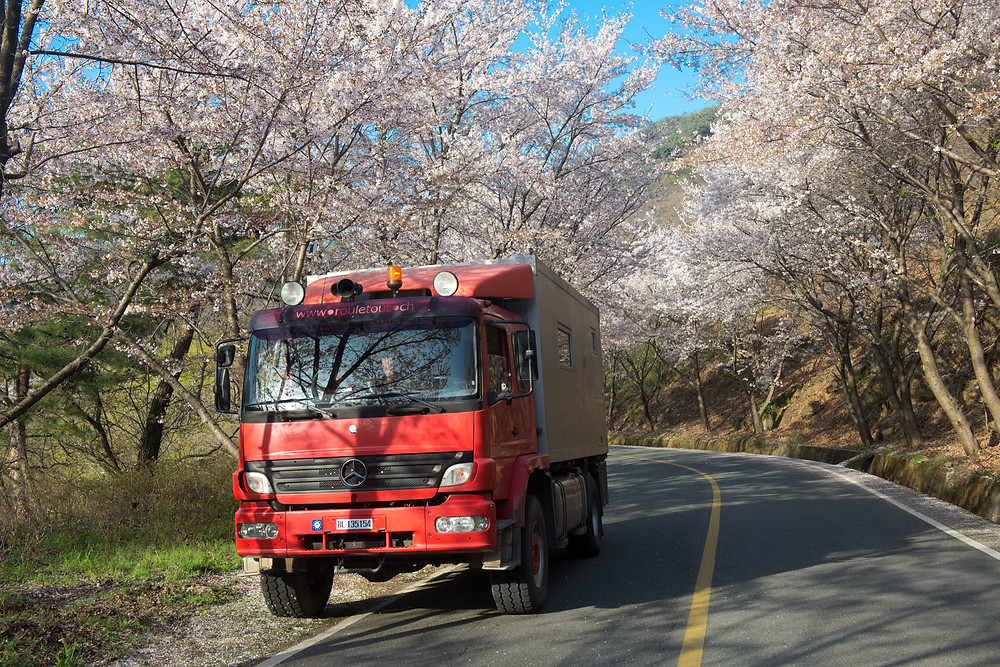 Under the blooming cherry trees
