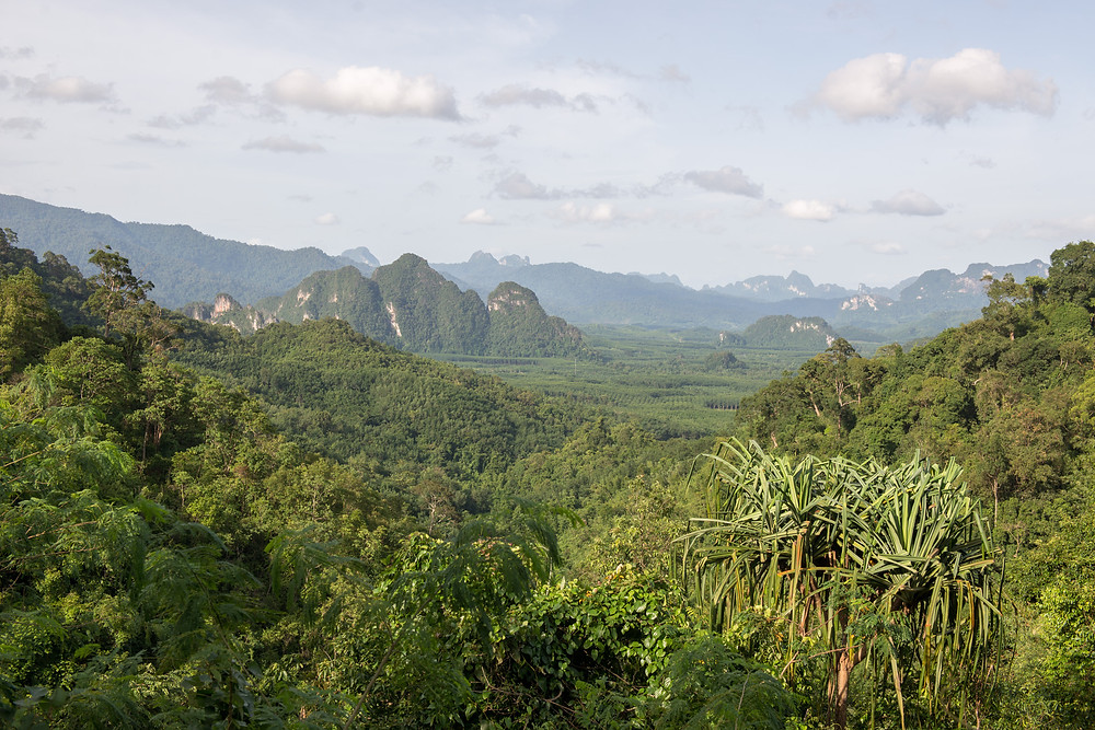 On the way to Khao Sok N.P.
