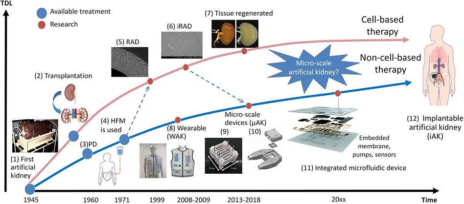 Toward Portable Artificial Kidneys - Bac