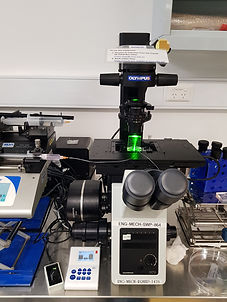 Olympus microscope.jpg