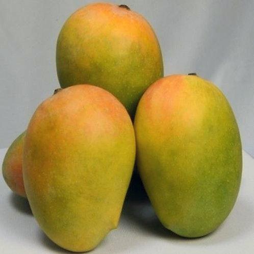 Kesar mango(केशर कच्चा) 1 किलो