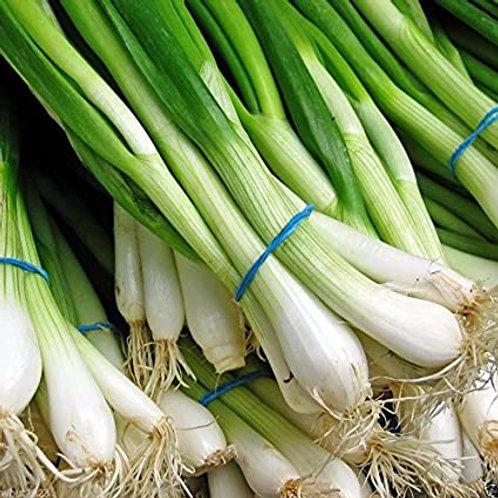 Spring onion (कांदा पाने)250gm