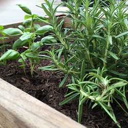 fresh herbes