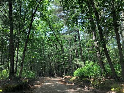 lake road.jpg