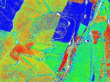 Forestry Nelson Region (Normalised Point Cloud 2017)