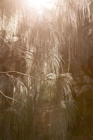 Landschaftsfotografie | Fraser Island, Australien