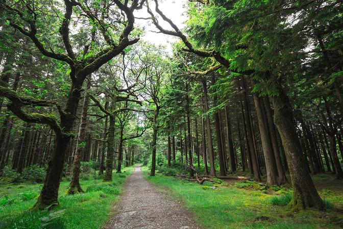 Landschaftsfotografie | Wald, Irland