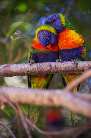 Landschaftsfotografie | Vögel, Australien