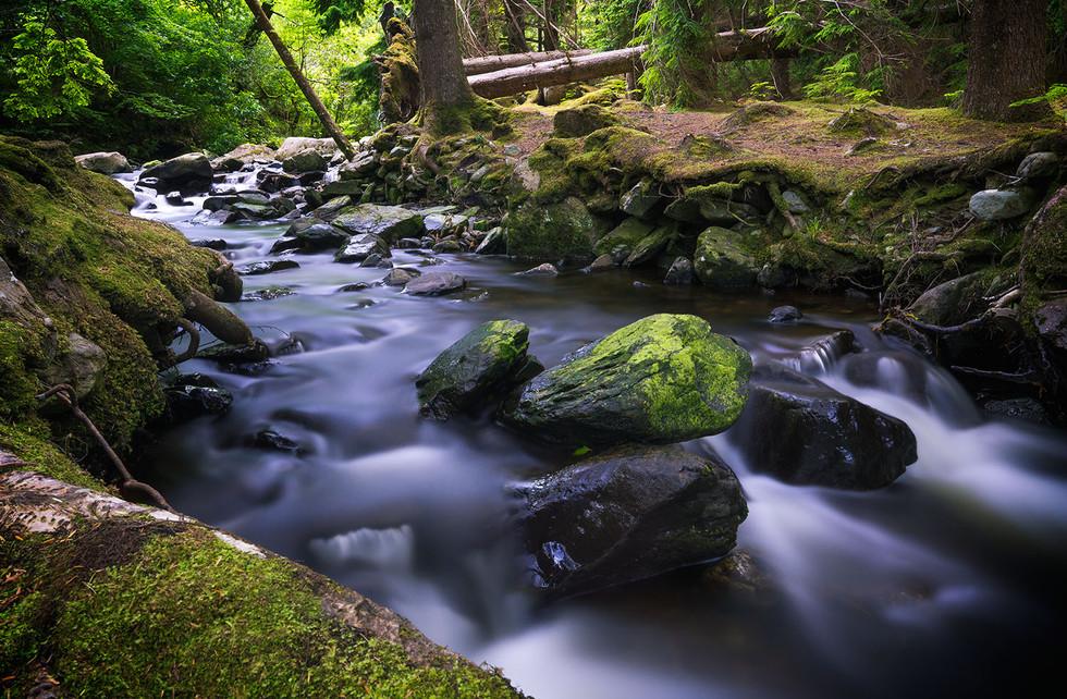 Landschaftsfotografie | Märchenwald, Irland