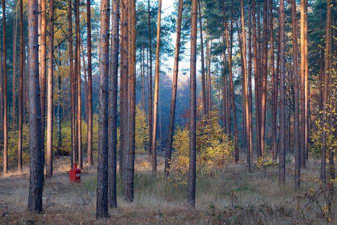 Landschaftsfotografie | Herbstwald, Brandenburg