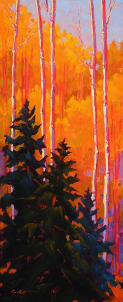 Pine in Aspenwood