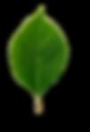 листик6.png