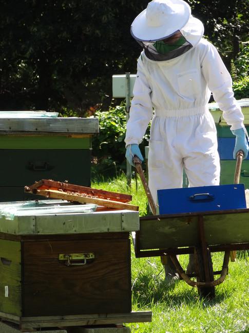 Des abeilles sont élevées dans le parc, qui permettent à la communauté de manger un miel de qualité.
