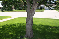 trees, tree care, tree treatment, tree maintenance, wood bore, bag worms, bagworms, yellow trees
