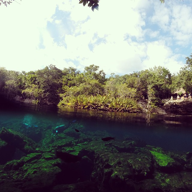 It is one of the Cenotes in the Riviera Maya known as Garden of Eden