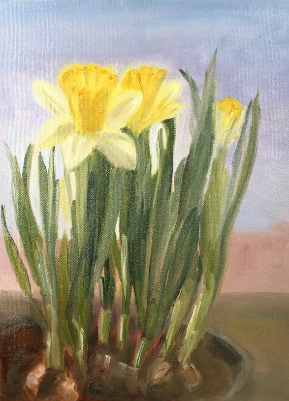 Daffodils in the Window 2021