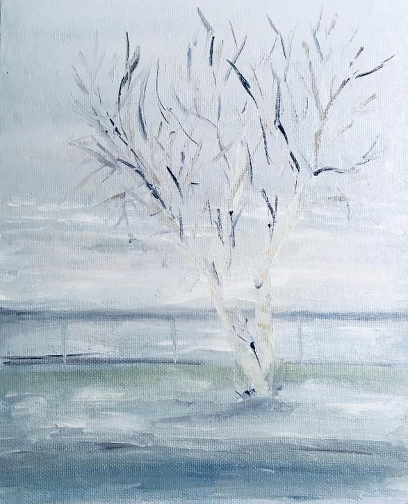 White Birch on Lac Saint-Jean 2021