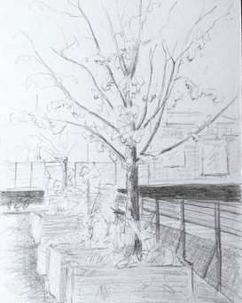 Tree at Bâtiment 7 2020