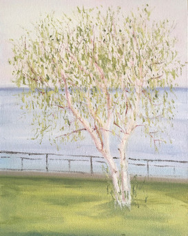 Little White Birch on the Shores of Lac-Saint-Jean 2021