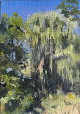 Weeping Willow at Maison Saint-Gabriel 2020