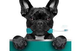 Pet_Kategoriebild.jpg