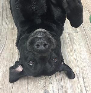 Massage Hund Hundewerkstatt