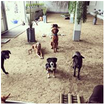 Daily Dogs Hundehalle.png
