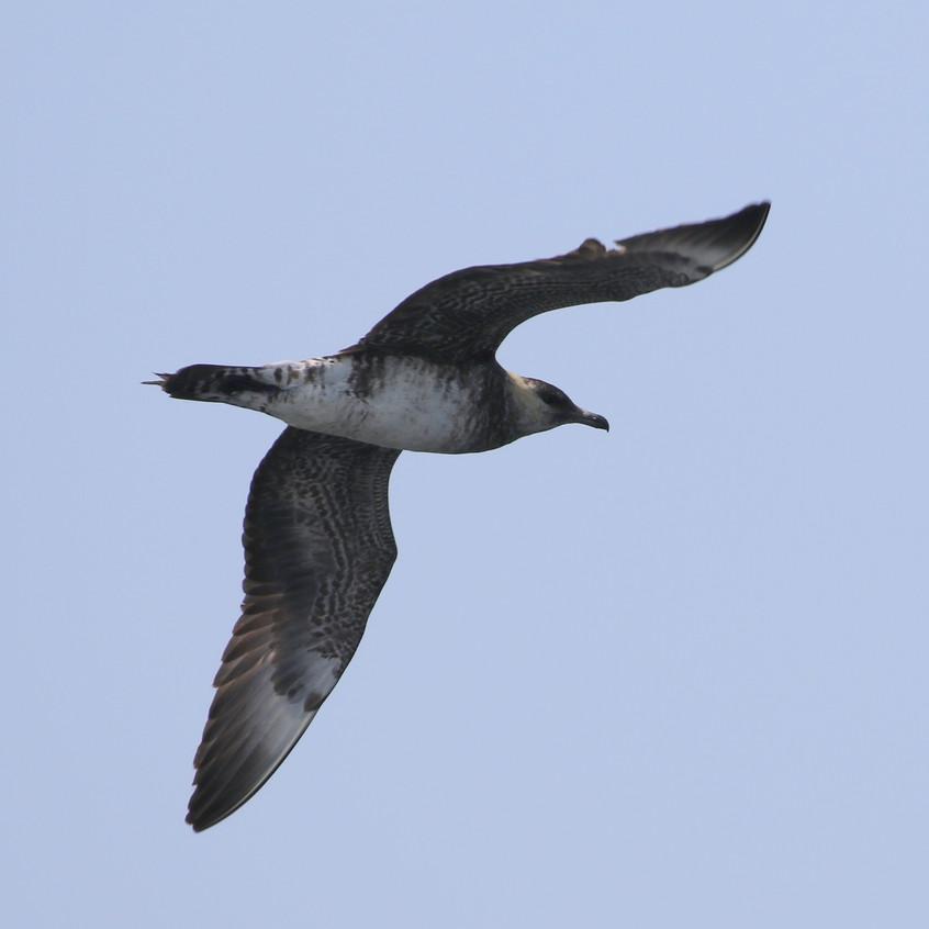 Same as the previous bird.