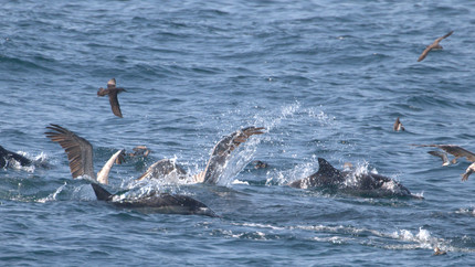 Island Wildlife Cruises with a Bird Guide