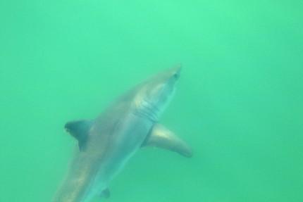 Sorry a Shark has eaten my old blog ;)