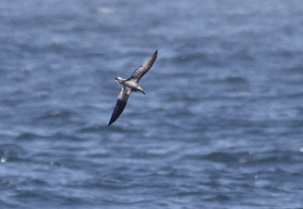 July 12th, Pelagic with Island Packers