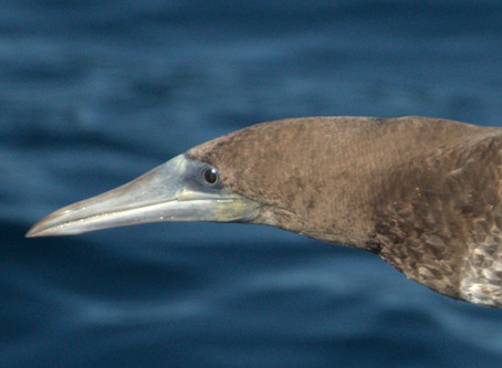 2020 Pelagic Trips with Island Packers