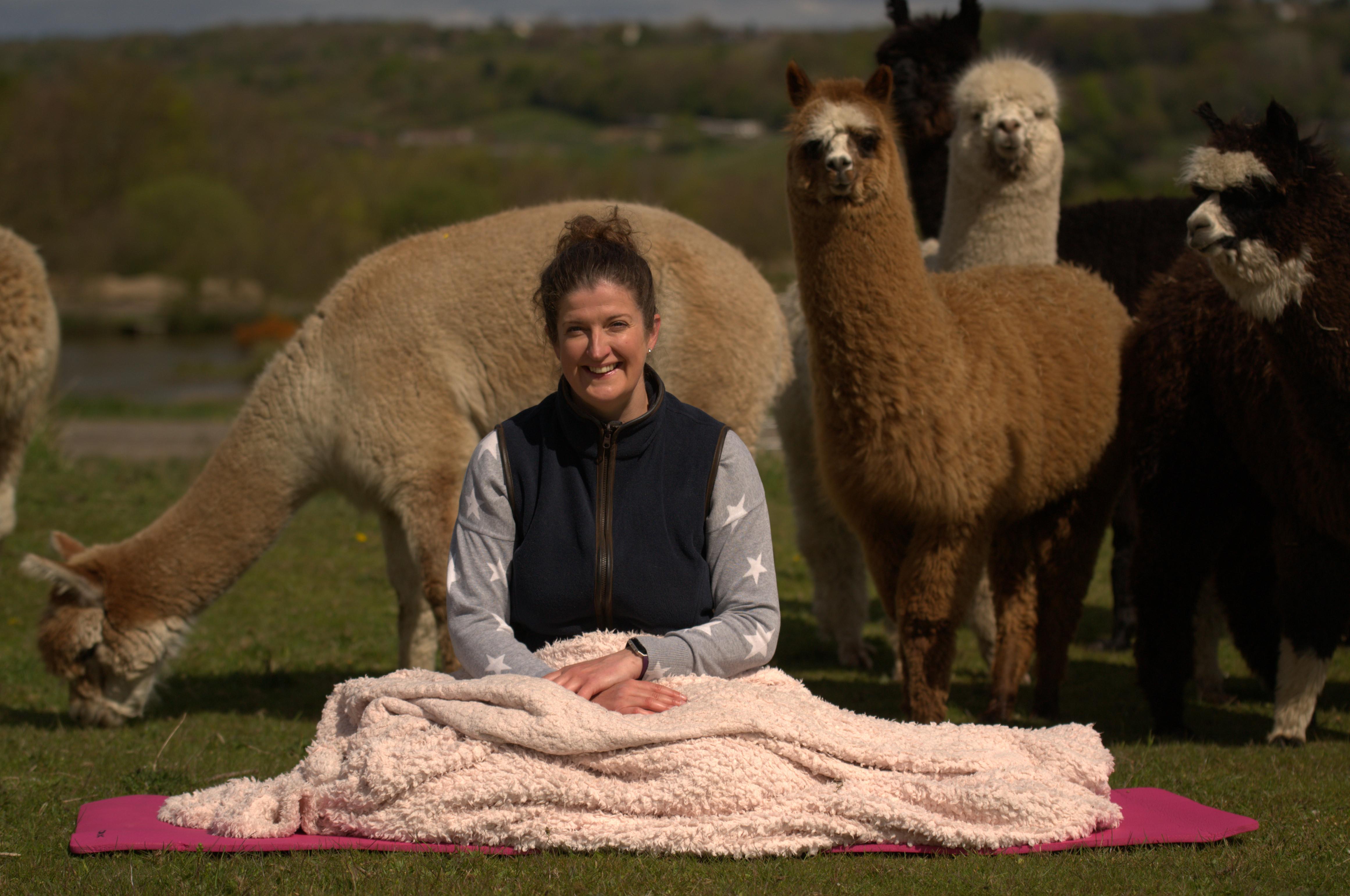 Alpaca Meditation and healing